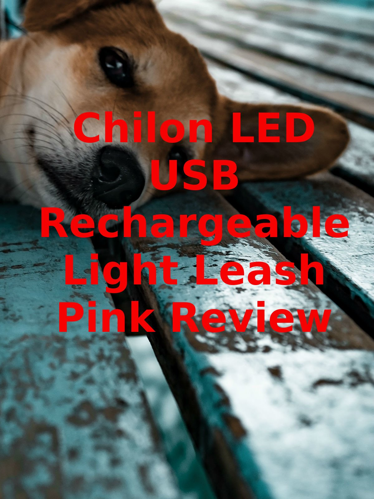 Review: Chilon LED USB Rechargeable Light Leash Pink Review on Amazon Prime Instant Video UK