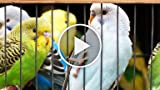 How to Recognize a Pet Bird Medical Emergency