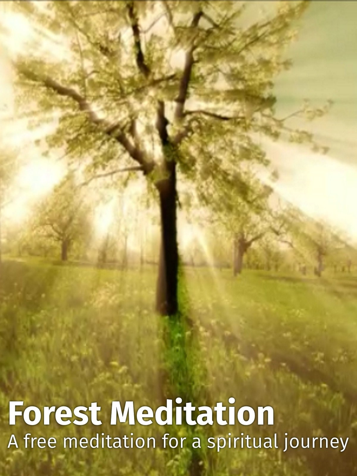 Forest Meditation on Amazon Prime Instant Video UK