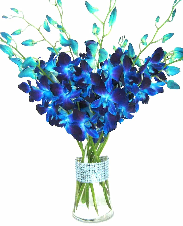 Blue Dendrobium Orchid