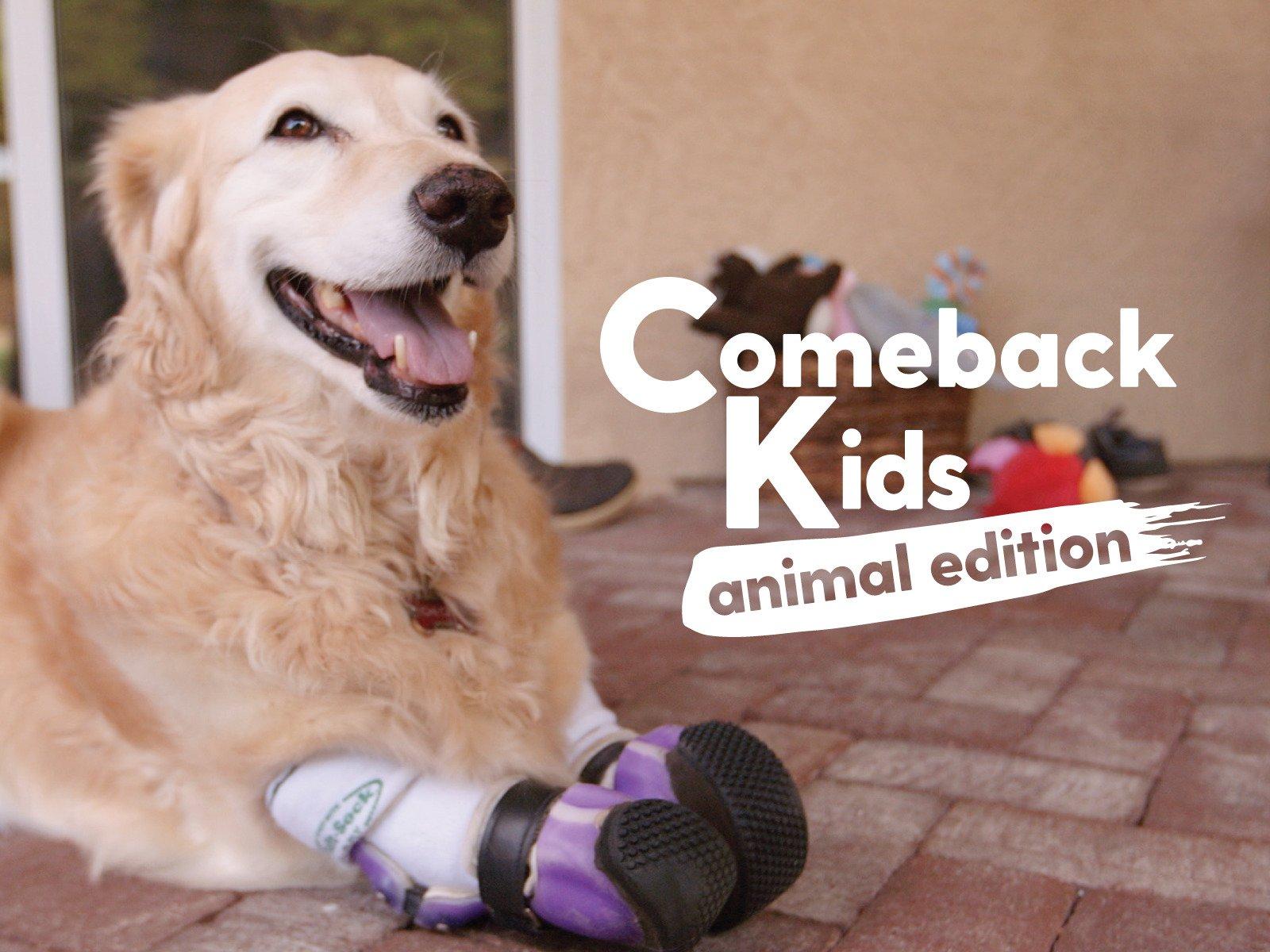 Comeback Kids on Amazon Prime Video UK