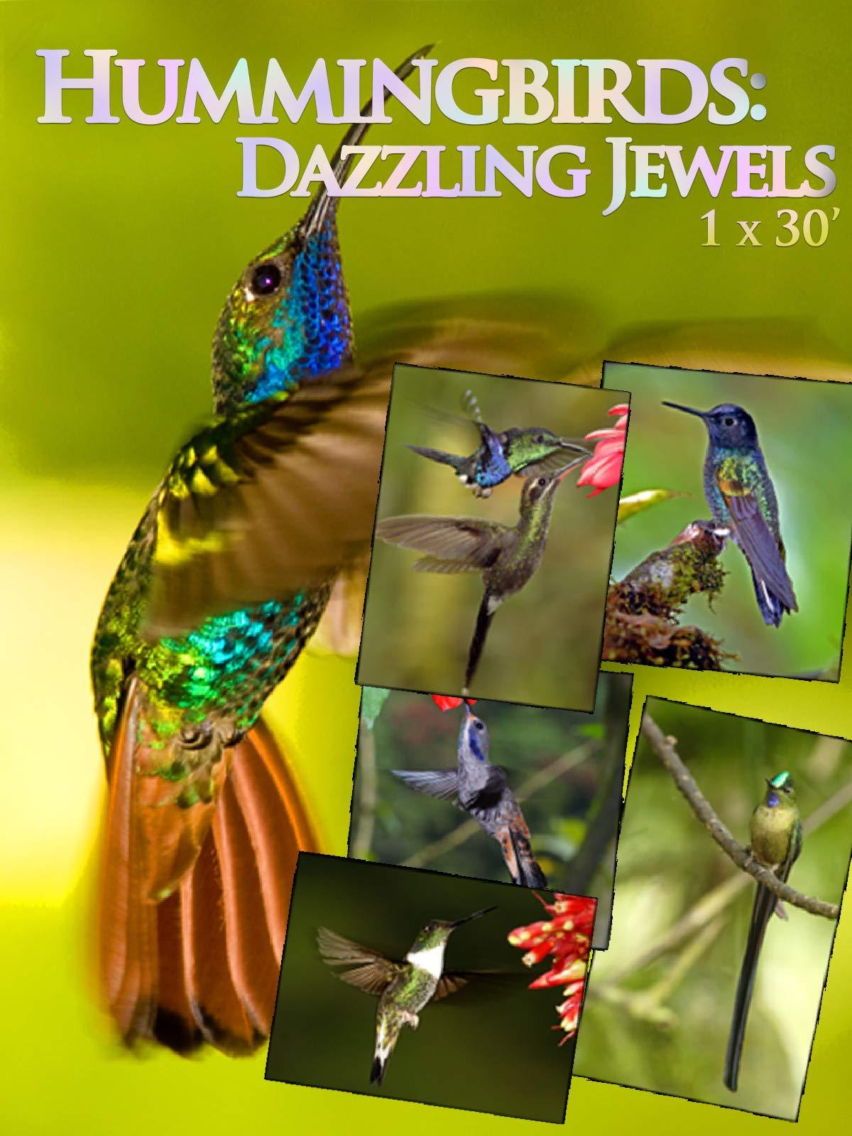 Hummingbirds: Dazzling Jewels on Amazon Prime Instant Video UK