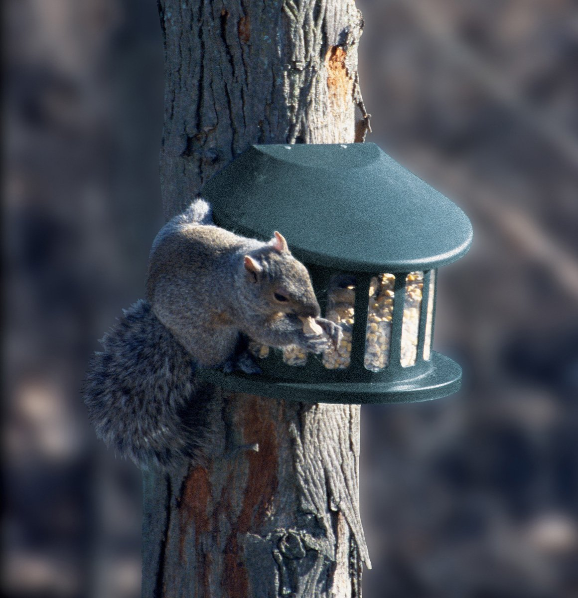 Woodlink Squirrel Diner Feeder  Model