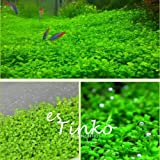 1000pcs Aquarium Grass Seeds Water Grass Aquatic Plant Seeds Aquarium Ornament Plant (Color: Green)