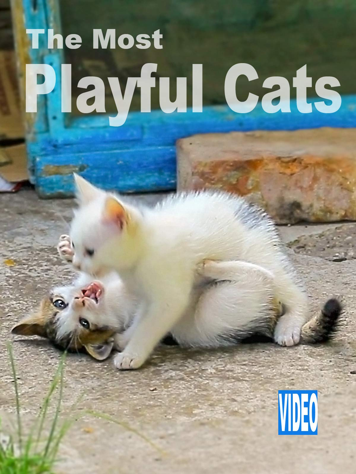 Clip: The Most Playful Cats
