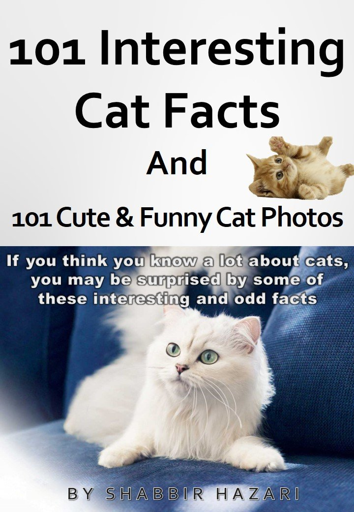 maine coon cat names male