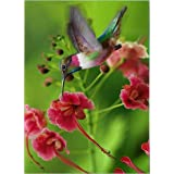 AiEllen DIY Diamond Painting by Numbered kit, Full-drilled Hummingbird Cross-Stitch Art Craft Wall Decoration,18X12 inches (Color: L1)
