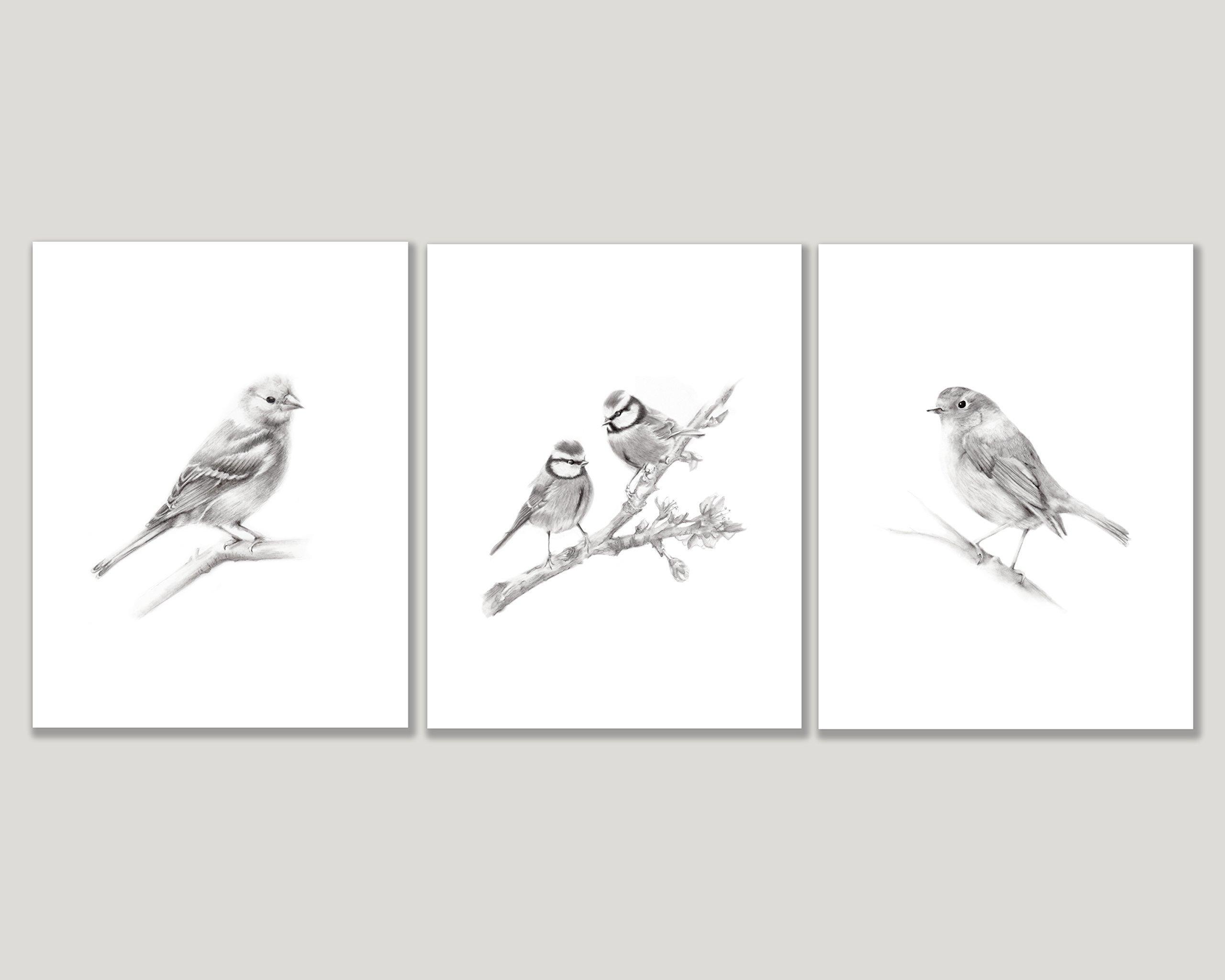 Bird Pencil Art Prints