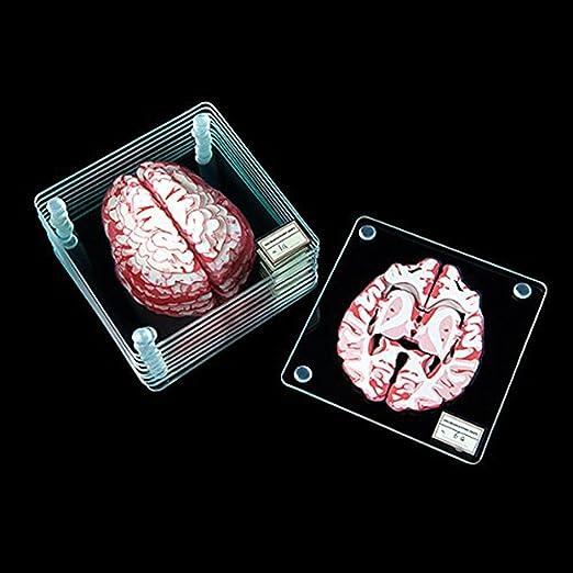 Amazon.com | Brain Specimen Coasters: Coasters