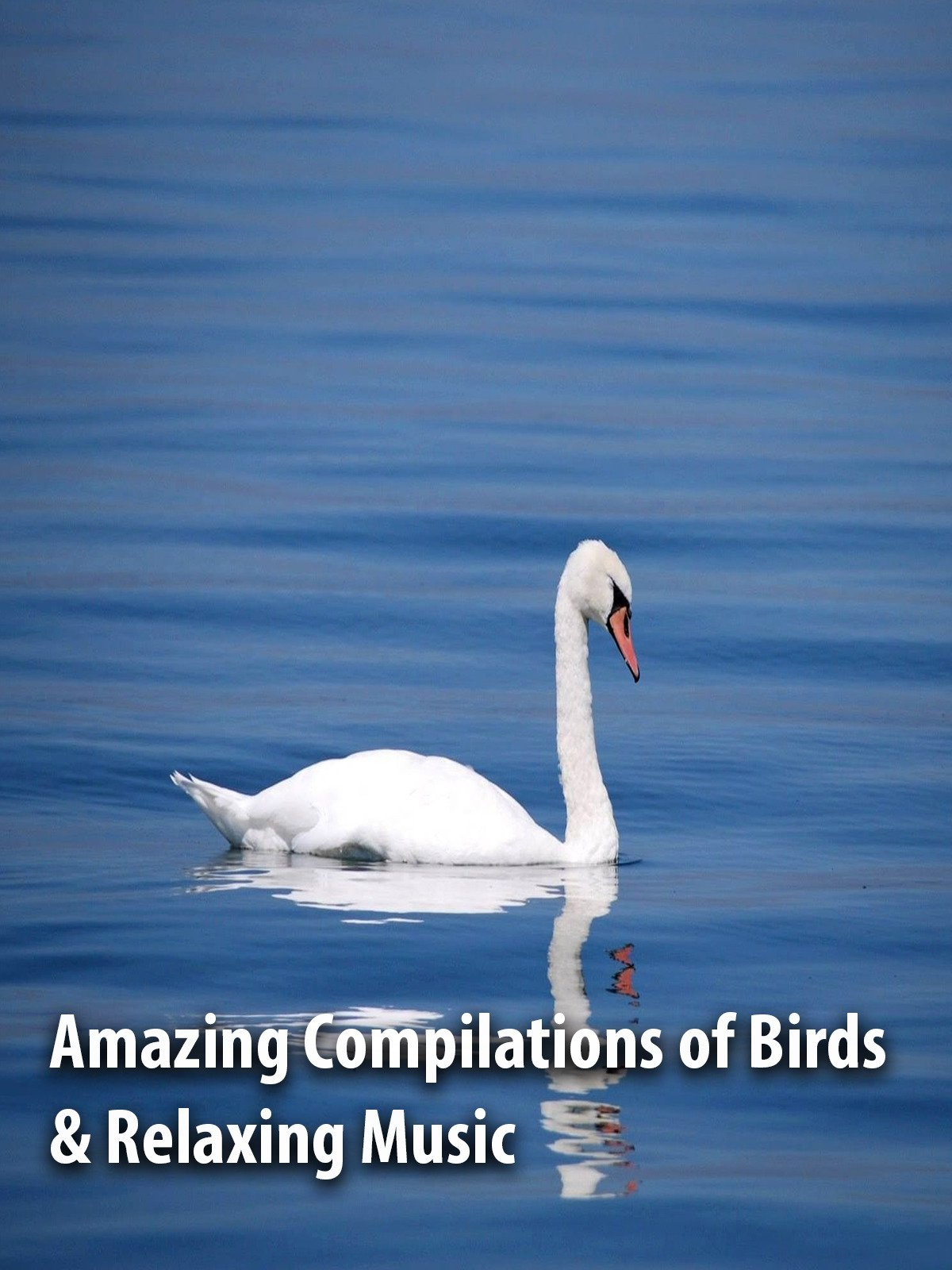 Amazing Compilations of Birds & Relaxing Music
