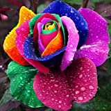 Poity Colorful Rainbow Rose Flower Seeds Petal Plants Home Garden Yard Decor 200 Pieces (Color: Multicolor)