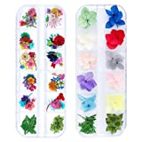 iFancer 86 Pcs Dried Flowers Nail Art 51 Colors 3D Dry Flowers for Nails 2 Boxes Small Tiny Dried Flowers for Nail Art Little Pressed Real Natural Flower Nail Art Design Decoration Supplies