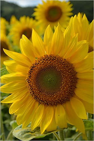 Sunflower Journal: 160 Page Lined Journal/Notebook