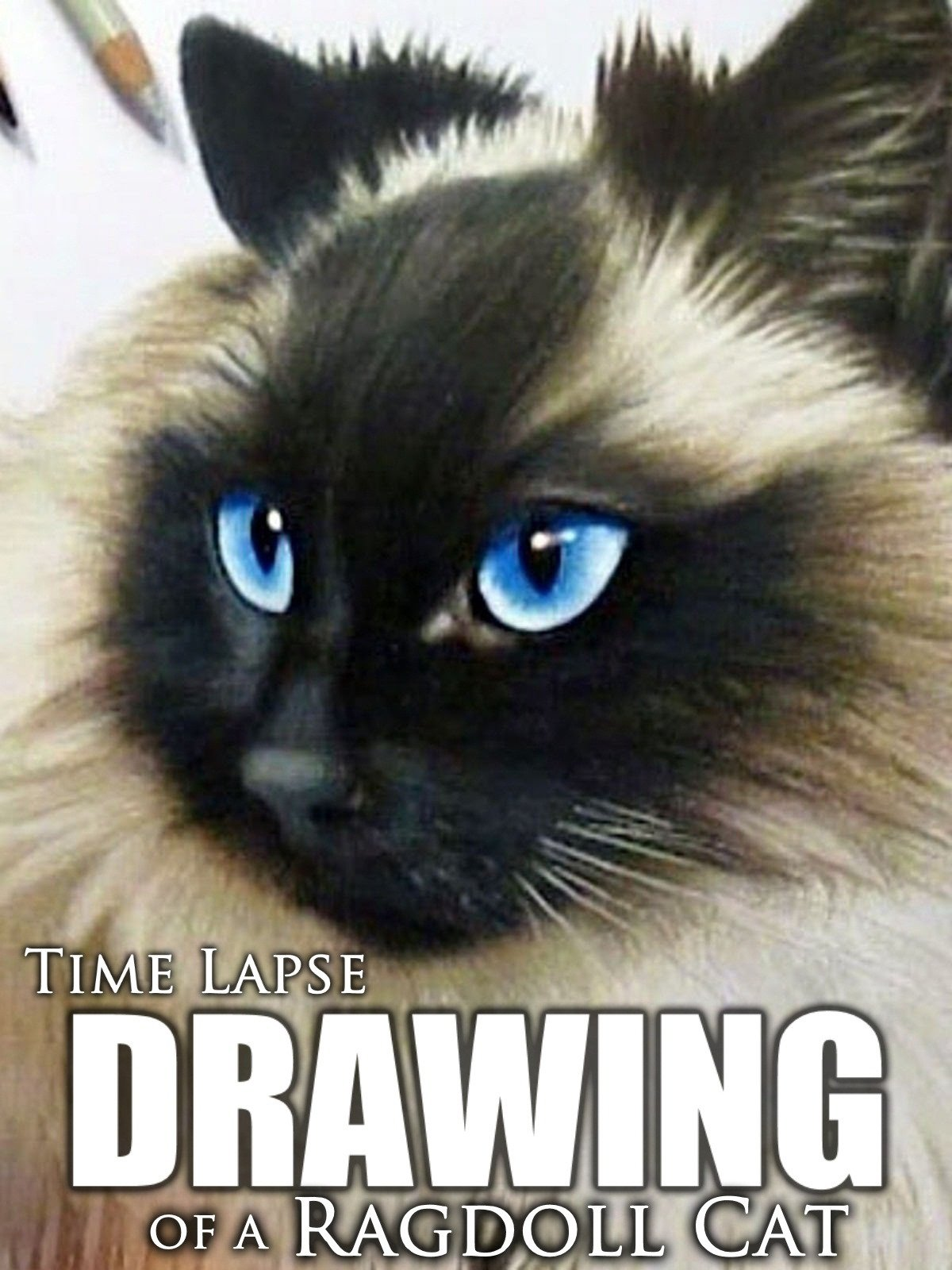 Clip: Time Lapse Drawing of a Ragdoll Cat