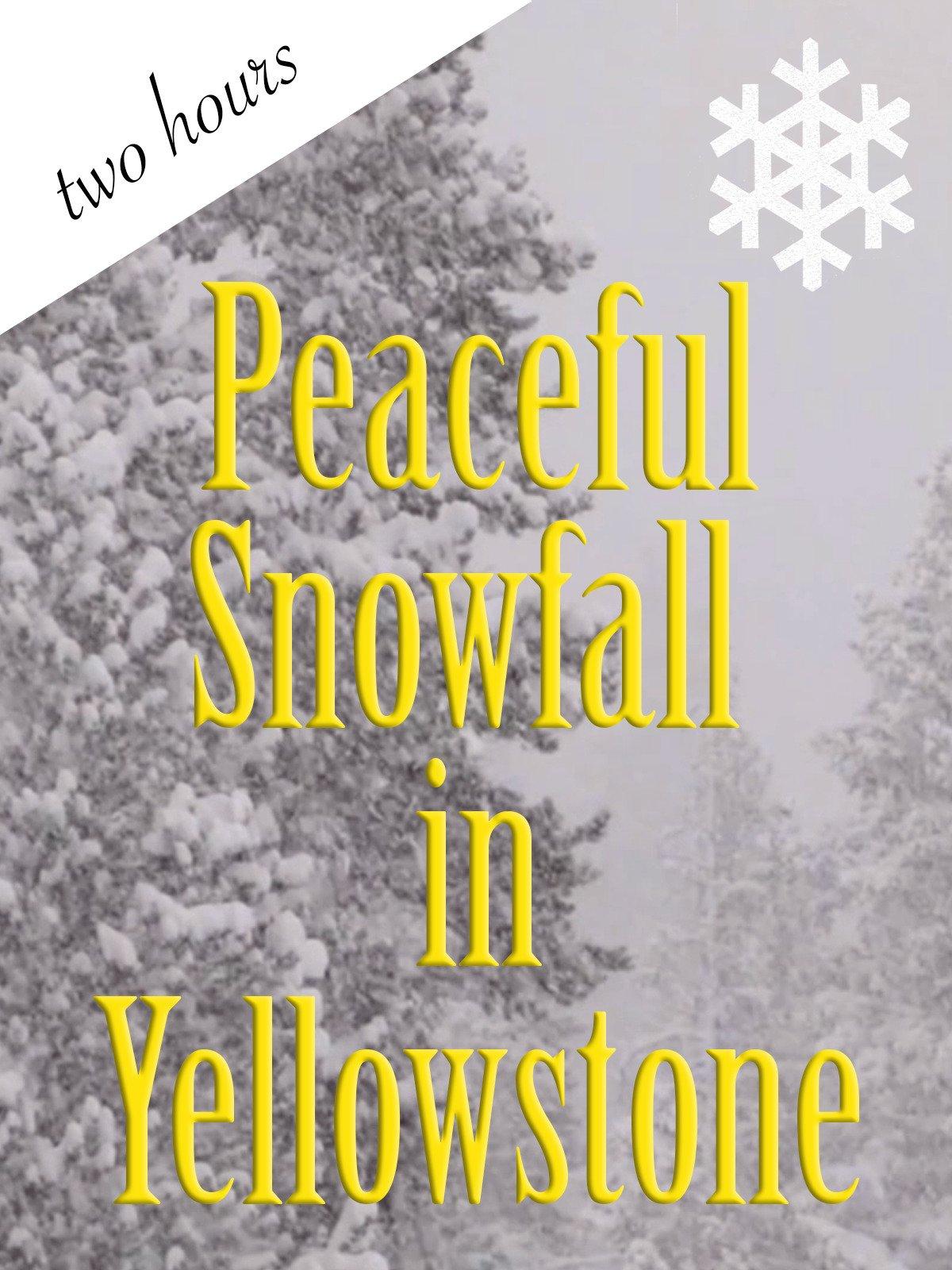 Peaceful Snowfall in Yellowstone