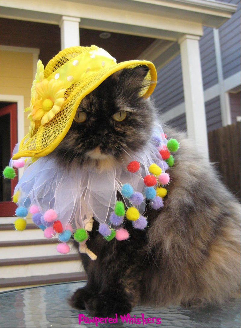 easter costumes for dogs and cats