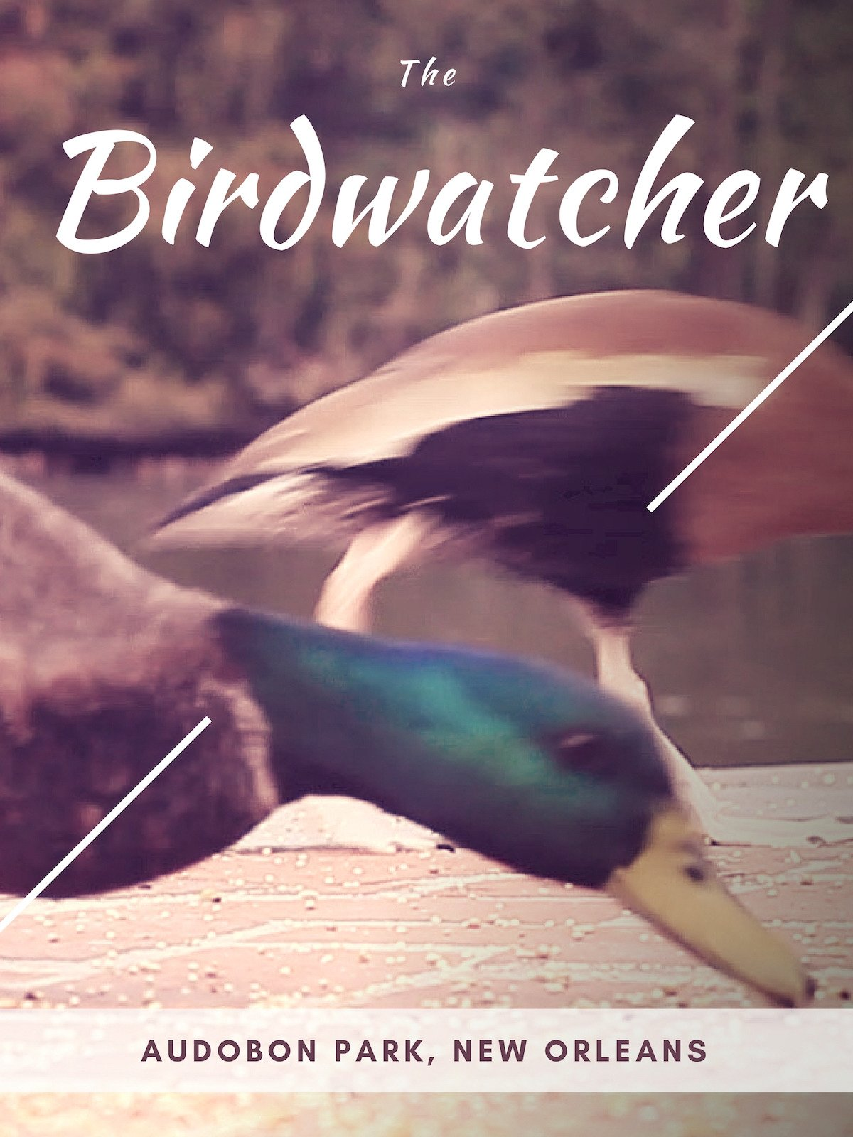 The Bird Watcher: Audubon Park (The Ultimate Birds Video For Cats Collection)