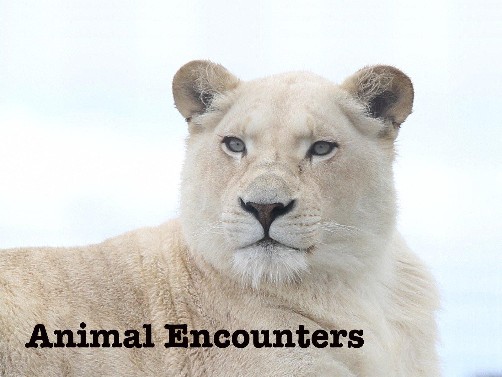 Animal Encounters on Amazon Prime Video UK