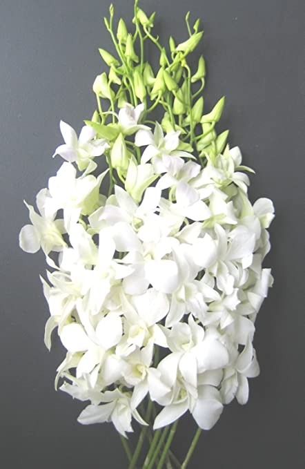 Fresh Flowers | Just Orchids White Dendrobium
