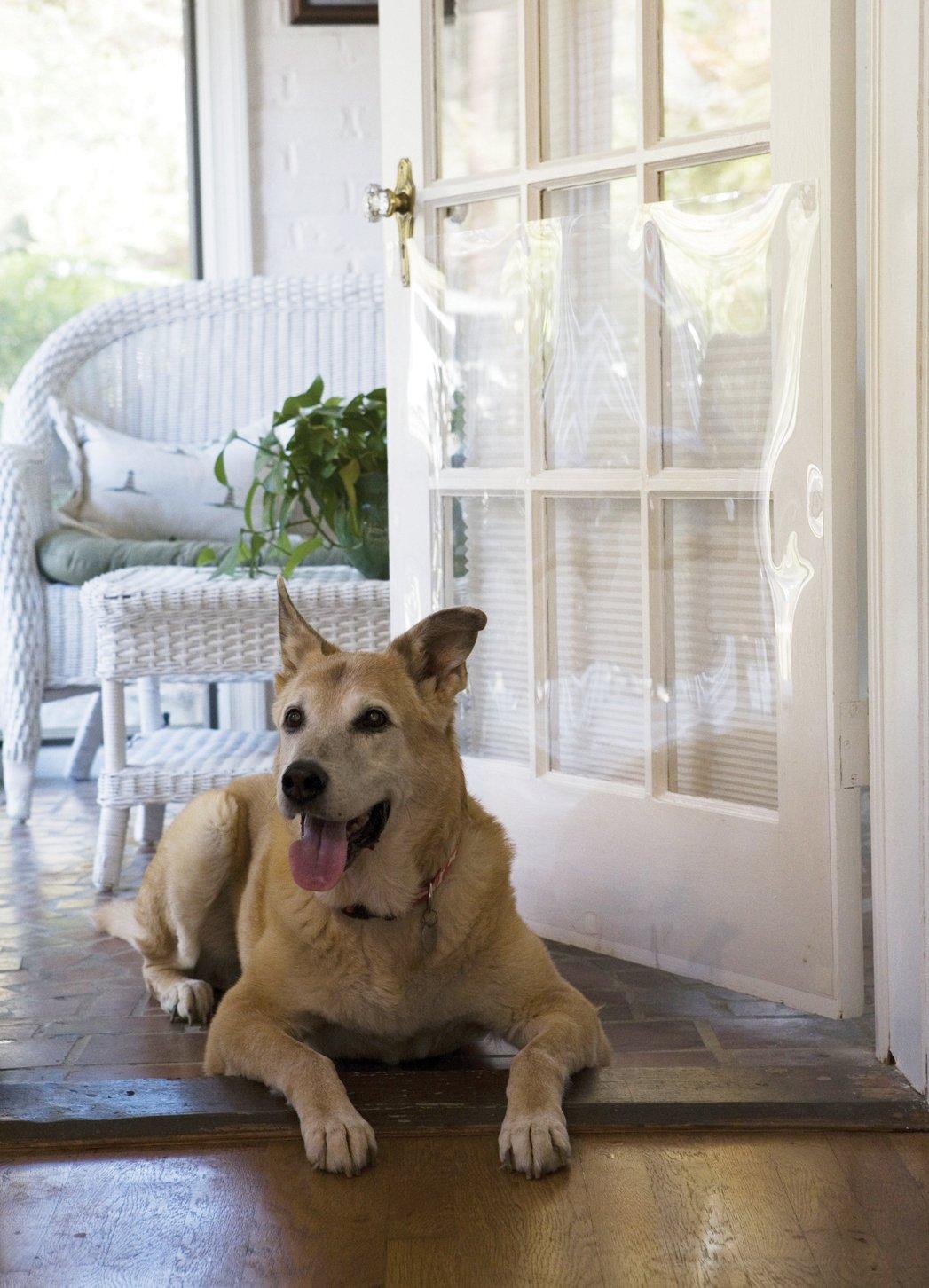 The Door Shield Pet Scratch Protector New Free