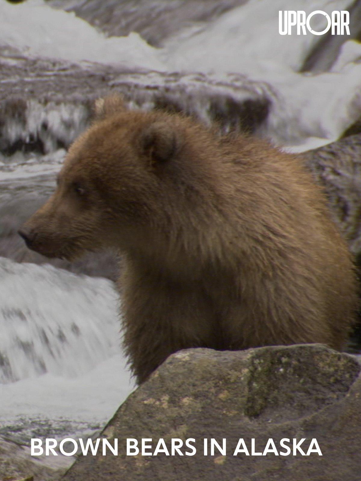 Clip: Brown Bears in Alaska