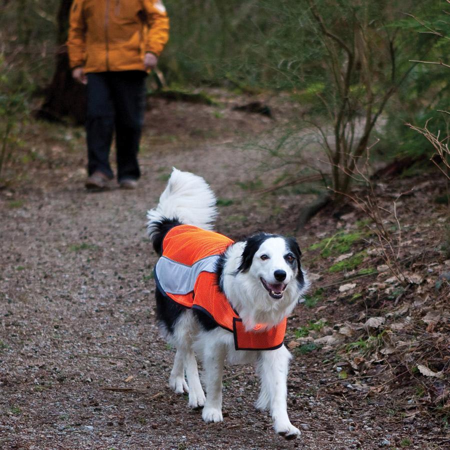 Amazon.com : CANINE FRIENDLY High Visibility Dog Vest, Large : Pet ...