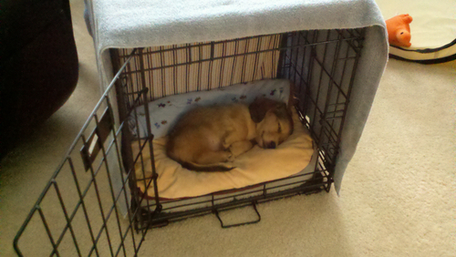 Dog Storage Blog Archive Read About Midwest Icrate Double Door