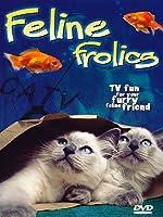 Feline Frolics: TV Fun For Your Cat (Cat Entertainment Video)
