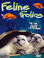 Feline Frolics: TV Fun For Your Cat (Cat Entertainment Video)