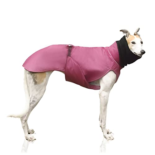 greyhound in pink winter coat