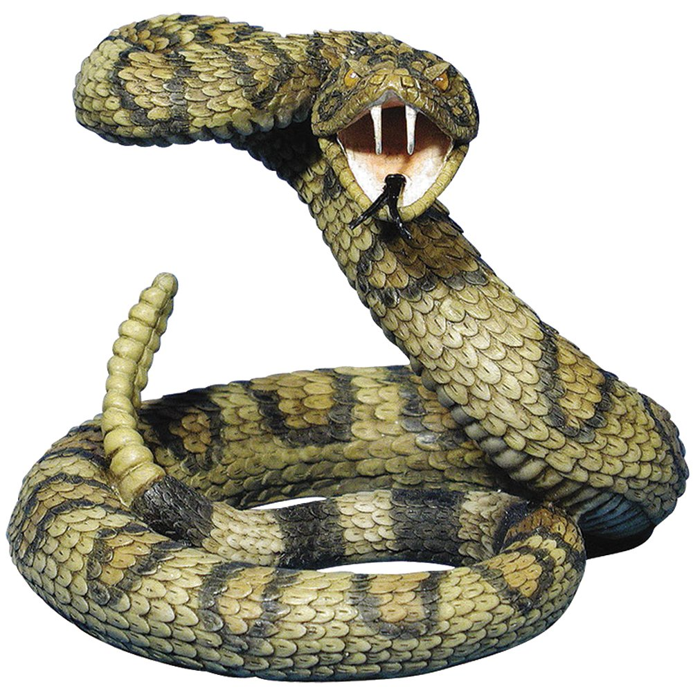 Striking Viper Or Coiled Rattle Snake Body Vector Clipart Image ...