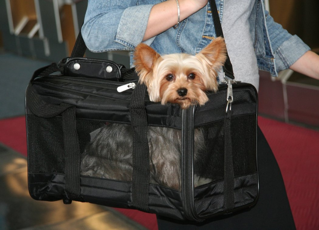 Small dog carriers all about bichon frise dogs for Air travel with dog in cabin
