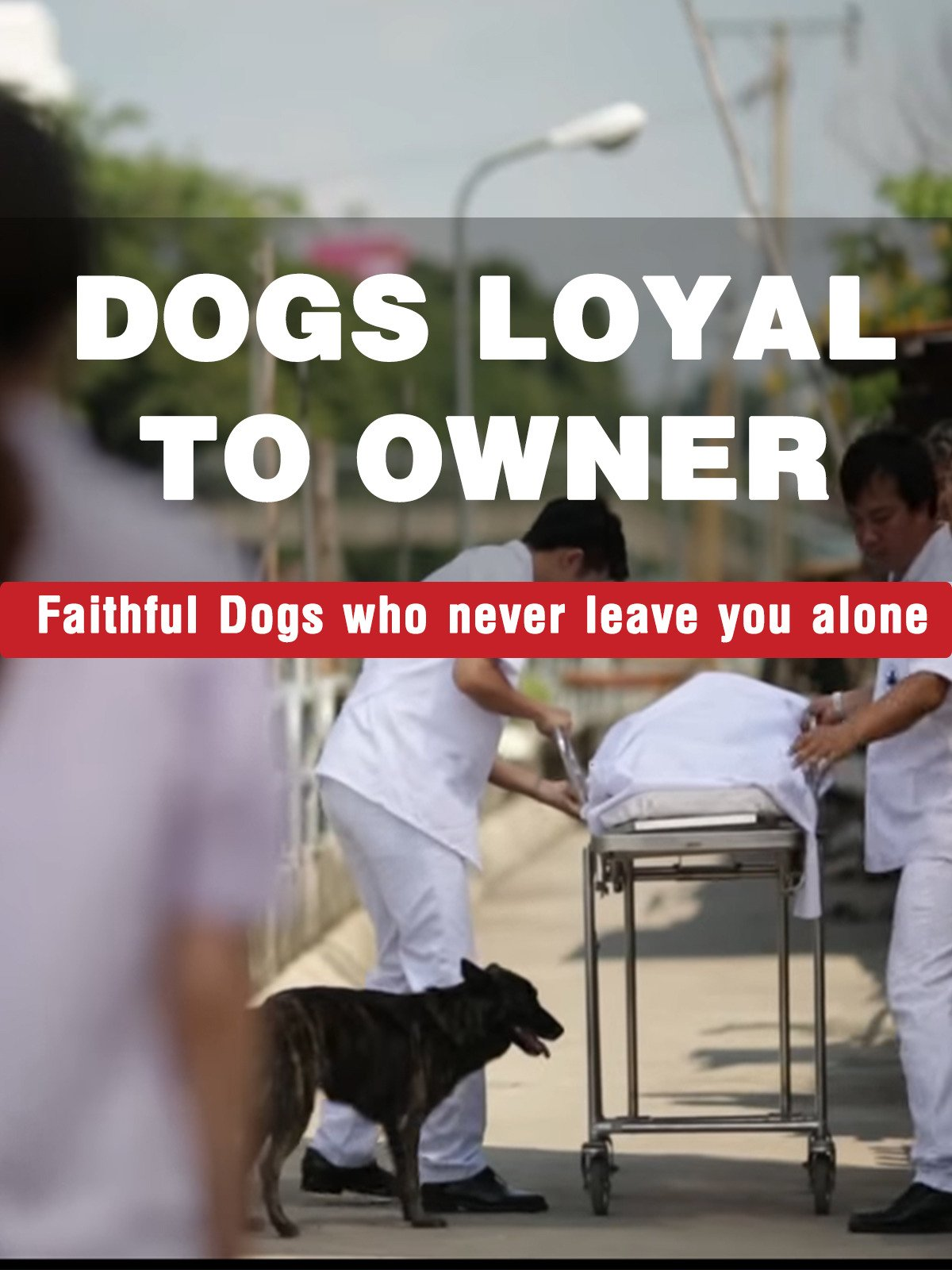 Dogs Loyal to Owner - Faithful Dogs who never leave you alone