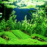 Aquarium Plants Seeds, Double Leaf Carpet Water Grass Green Aquatic, for Fish Tank Rock Lawn Garden Decoration (Color: green, Tamaño: Large Leaf)