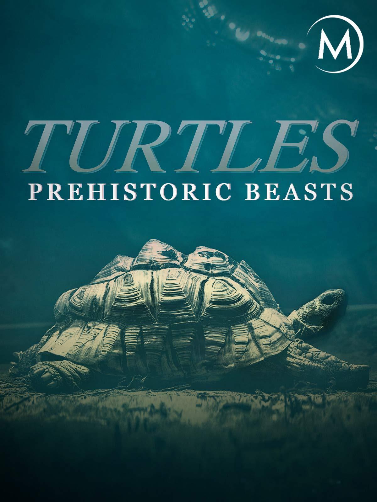 Turtles: Prehistoric Beasts on Amazon Prime Instant Video UK