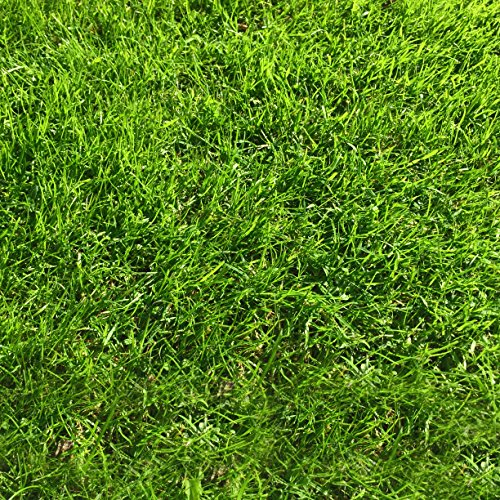 how to make grass grow fast