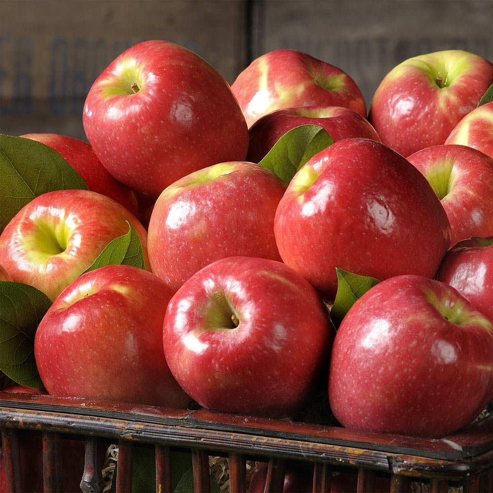 The Fruit Company Pink Lady Apples