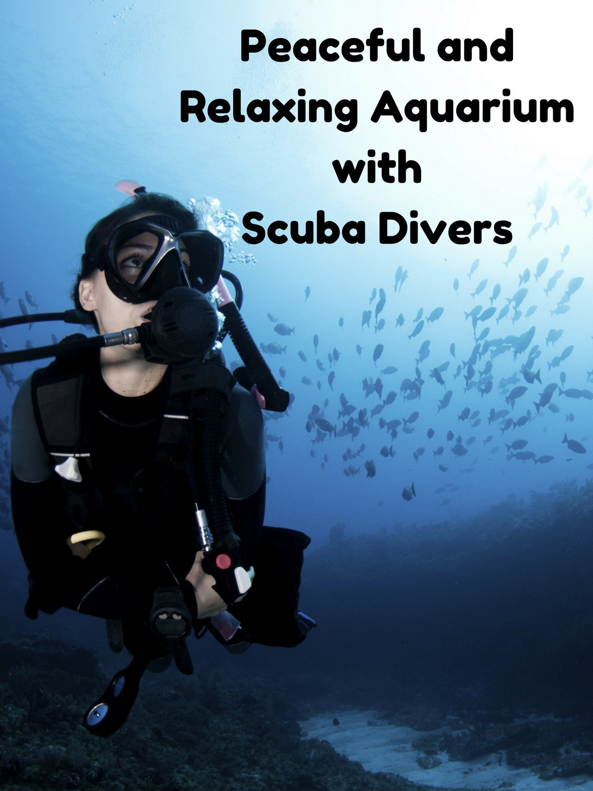 Peaceful and Relaxing Aquarium with Scuba Divers