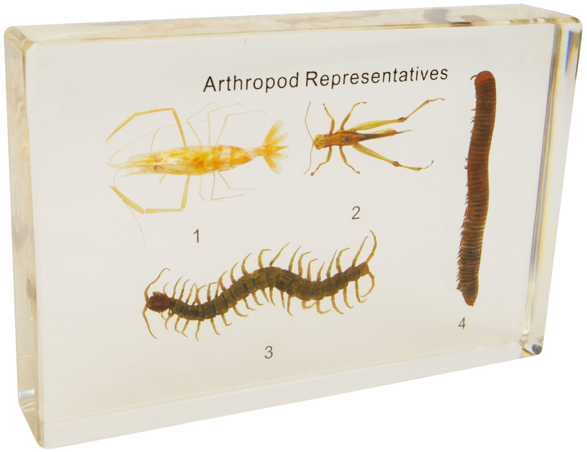 部分节肢动物标本