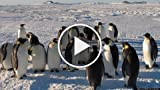 John Downer and Philip Dalton Talk 'Penguins: Waddle...