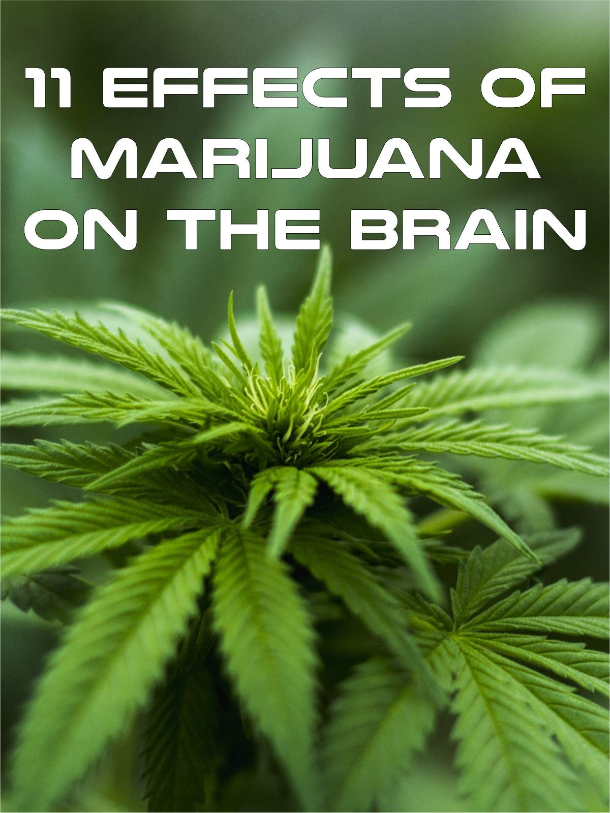 11 Effects of Marijuana on the Brain
