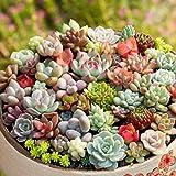 300pack Mix Succulent Seeds Woopowwer Bonsai Plants Seeds Flower Pots Planters Home Garden Decoration …