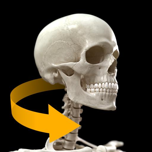 Skeletal System - 3D Atlas of Anatomy