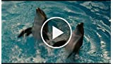Dolphin Tale: And These Are The Upstairs Pools