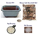 Succulent Potting Kit(4 inch). Ceramic Bonsai Clay Pot, Soil, Screens and Top Dressing. 6 Pot Colors - Vintage Blue Rectangular Clipped Corner