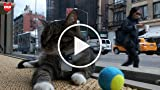 Pop-Up Cat Cafe in New York's Lower East Side