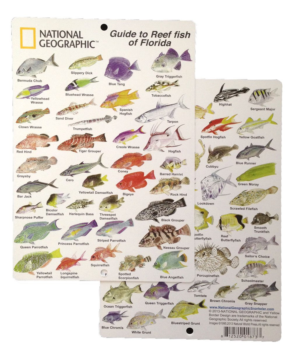 Hawaii Reef Fish Guide Images