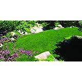 Kentucky Bluegrass Seed: Blue Ribbon Blend (500 sq ft) (Tamaño: 500 sq. ft.)
