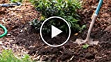 How to Water & Backfill Your Plants