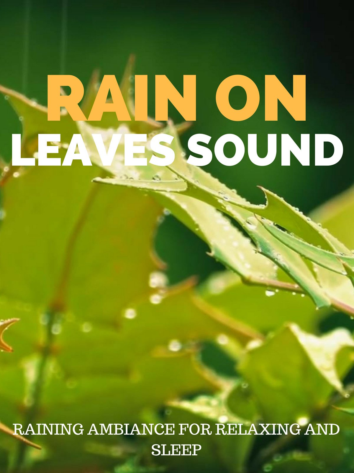 Rain on Leaves Sound Raining Ambience for Relaxing and Sleep